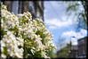 Flowerburst (ross.colgan) Tags: uk flowers london 35mm spring colours dof bokeh sony sunny unknown bloom growing burst alpha kentishtown nex nex6