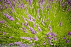 PLW_5579 (Laszlo Perger) Tags: wien vienna sterreich austria blumengarten hirschstetten flowergarden