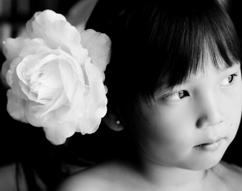 Dahlia white rose 063-2