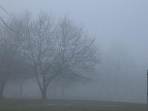 1-25-11 Fog