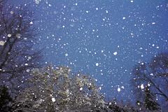 [フリー画像] 自然・風景, 雪, 樹木, 201102020500