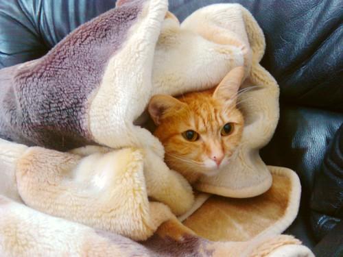 床墊秋刀魚的流浪貓愛毯子