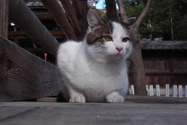 Today's Cat@2011-01-29