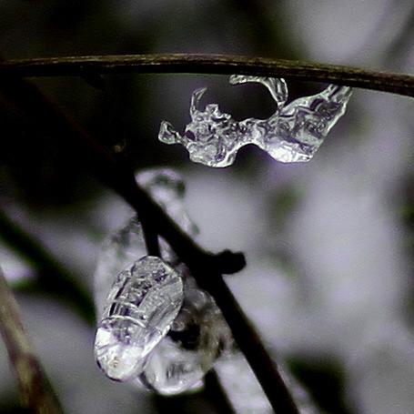 Ice - IMG_4829ax2