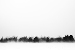 Billowing Snow (clee130) Tags: trees winter blackandwhite bw usa white snow black tree oklahoma canon landscape geotagged photography 50mm blackwhite unitedstates minimal snowing minimalism f18 okc ok blizzard oklahomacity midwestcity thriftyfifty 40d canon40d