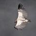 Free Bird -NEPAL
