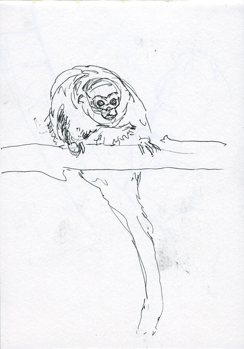 A sketch of a monkey I met at the zoo