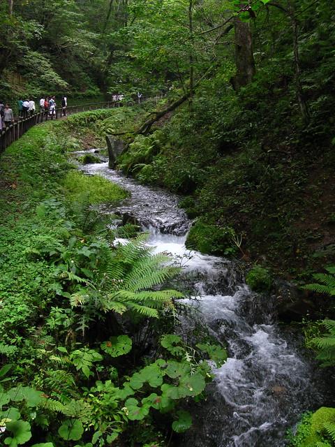 軽井沢の小川のフリー写真素材
