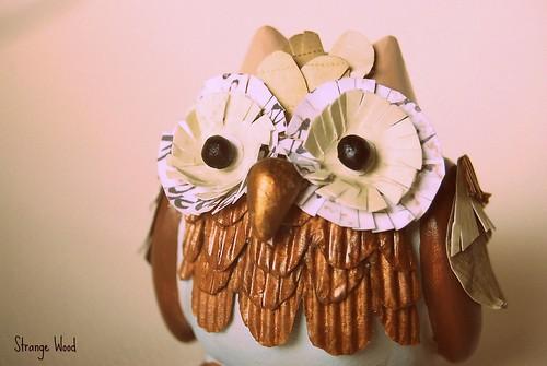 Owl primo piano