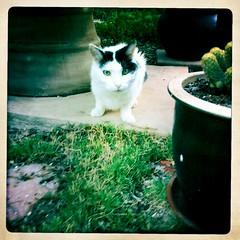 Zoe the Garden Cat by Jason Willis