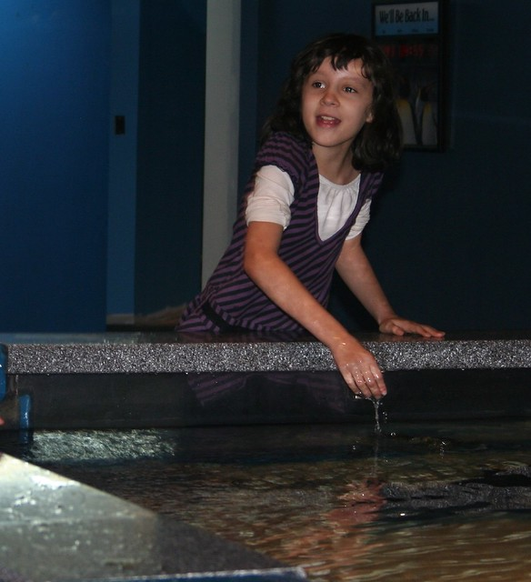 Newport Aquarium:  Maya