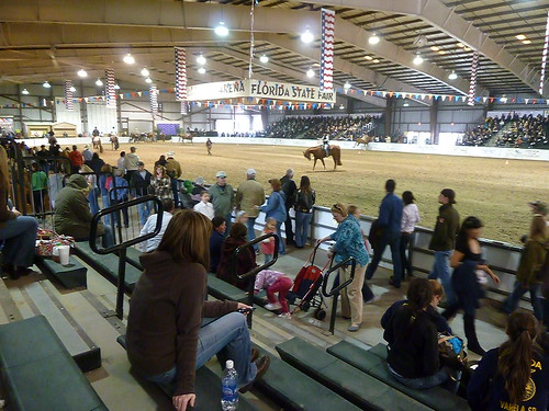 At the horse judging contest