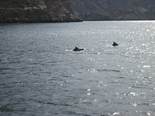 Dolphins In Distance