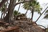 Japanese bunker on the edge of Ross