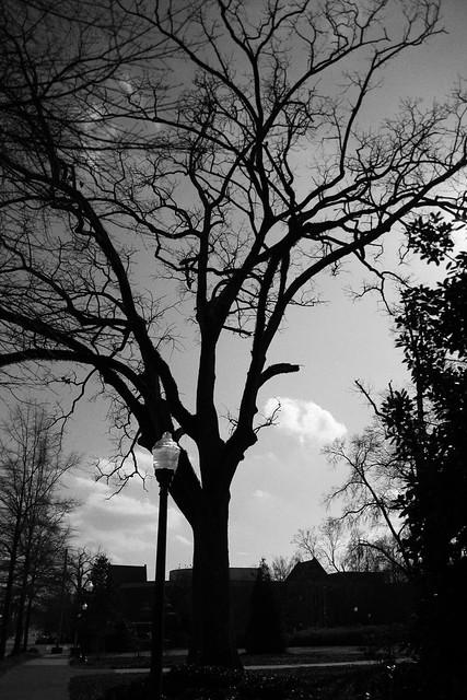 grainyauburntree