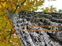 ความรัก กับ ต้นไม้