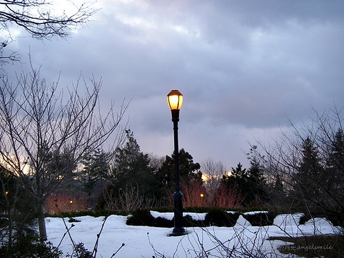 2011.2.8 Lonely street light (Queens Botanical Garden)