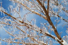 pretty! (PepOmint) Tags: winter cold tree yard outside anyone please michigan gorgeous bluesky icestorm tuesday reflective bueller frigid today februrary enough brilliant isitspringyet cravewarmth