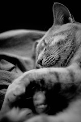 ...che in un sogno senza fine sembrano addormentarsi... (Federica Mu ) Tags: blackandwhite pet cute cat 50mm chat f14 felino asleep miao gatto semolina baudelaire micio semola blackwhitephotos grazielu igattihanno1000risorsestaitranquilla