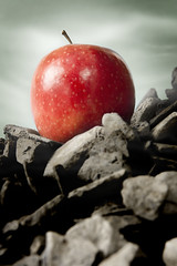 Magritte Project (College) (Tim Caldbeck) Tags: uk light food white abstract color macro london nature fruit photoshop 350d image flash sigma flickrcentral conceptual 1770 astounding blueribbonwinner creativeimagination flickrsbest strobist 450d 400d mywinners platinumphoto colorphotoaward superbmasterpiece macrophotosnolimits thatsclassy goldstaraward damniwishidtakenthat rockmymacroworld