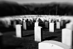 The Fallen (canadian_photography) Tags: sanfrancisco blackandwhite bw cemetery lensbaby soldiers composer sanfrancisconationalcemetery canadianphotography raywatson