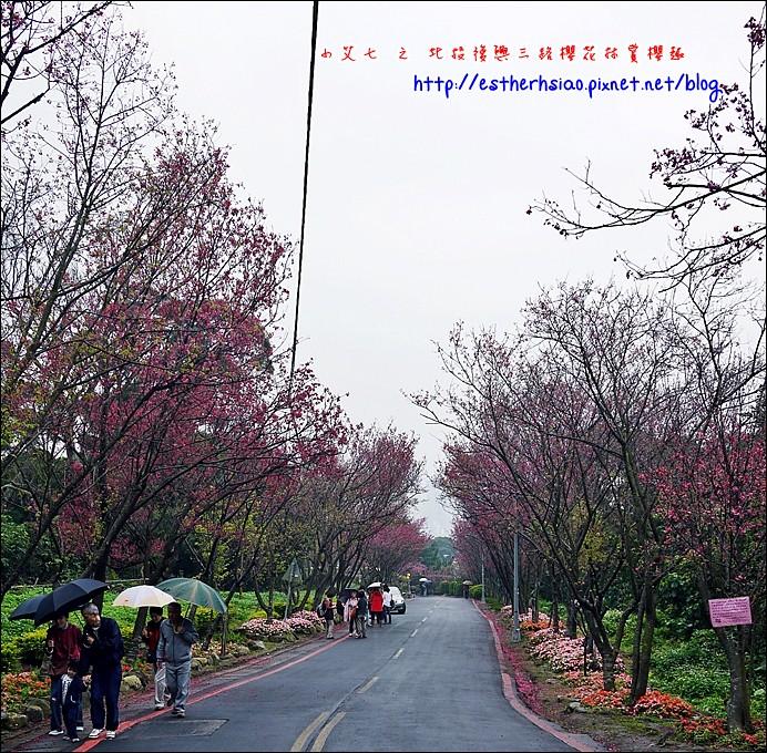 68 北投復興三路櫻花道
