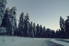 Feldberg (jpphotographie.de) Tags: schnee winter kalt feldberg morgens