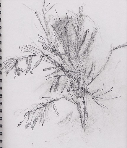 Drawing 25 - Olive branch