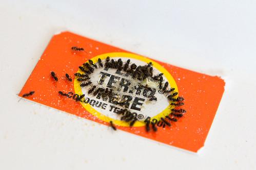 110303 Ants