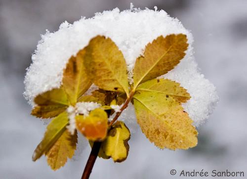 First Snow  -19.jpg