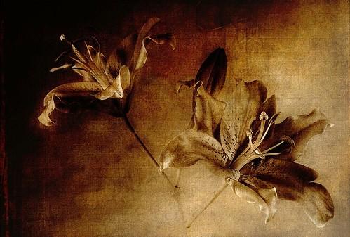 flowers texture tatot magicunicornverybest magicunicornmasterpiece mygearandme