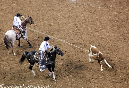 Serious Cow Roping