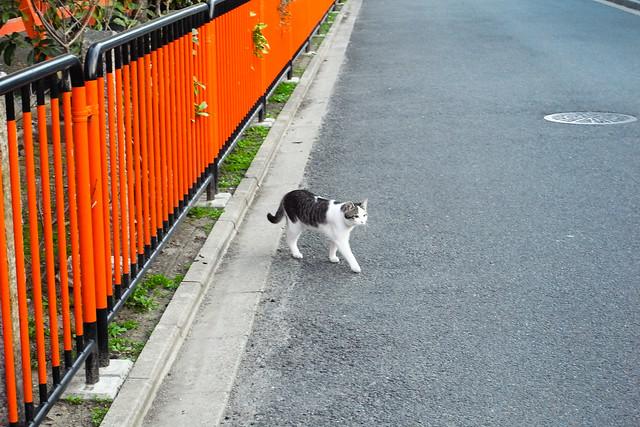 Today's Cat@2011-03-20