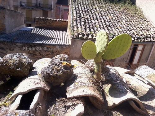Studio Sicilia: Rooftop cacti