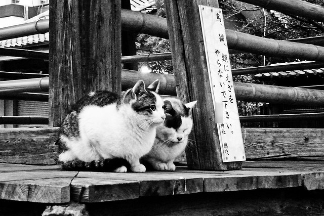 Today's Cat@2011-03-22