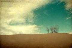 Desert (Mehrnoosh Jalil) Tags: desert iran ایران esfahan isfahan اصفهان تنها ابر آسمان آبی سکوت آرامش بیابان نارنجی کویر آسمون تنهایی قهوهای iranmap درختچه فیروزهای iranmapcom