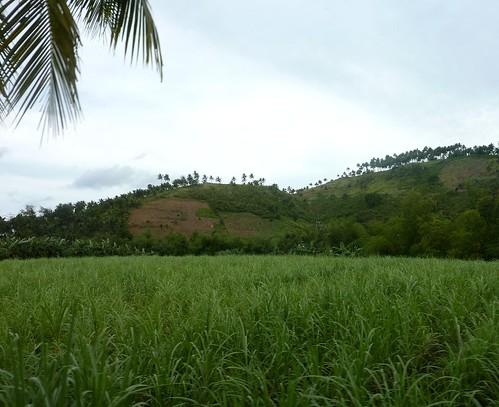 Negros -Bacolod-Savador-San Carlos (131)