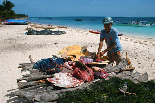 A local fisherman with his turtle catch in Timor, Indonesia.