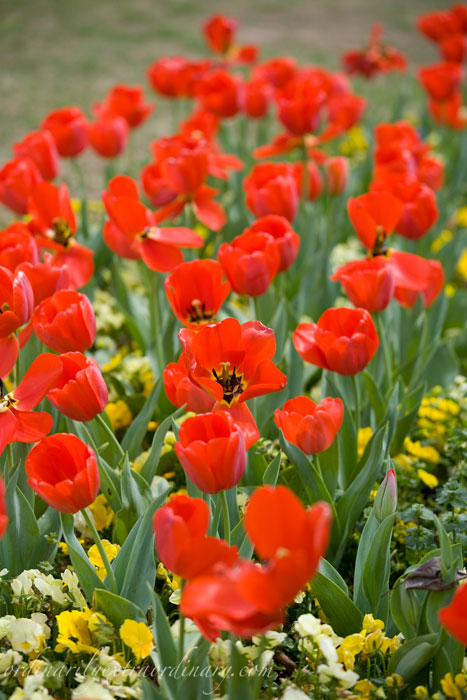 Spring_032611_0029web