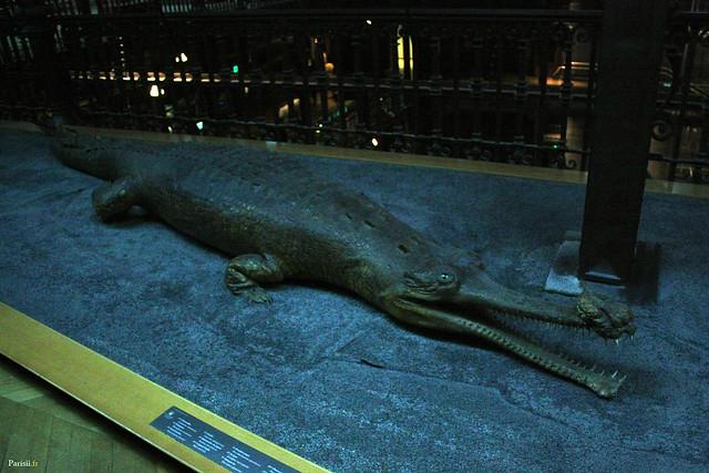 J'adore la tête de ce crocodile, avec son sourire