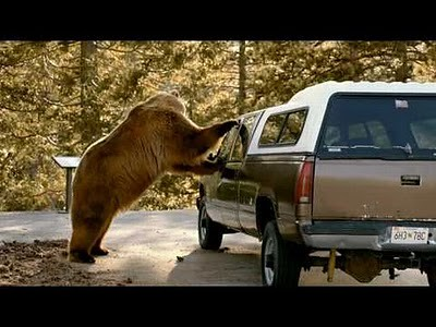 animals_attacking_cars_02