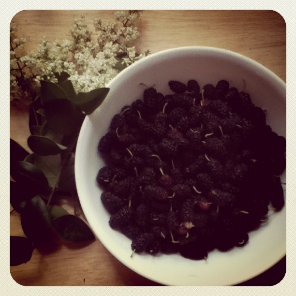 Today's happy discoveries just by the house...flowers and mulberries!