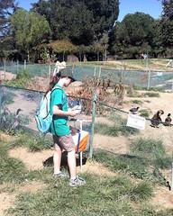 022 Braving The Guard Ducks (saschmitz_earthlink_net) Tags: 2016 california encino lakebalboa orienteering laoc losangelesorienteeringclub losangeles losangelescounty lakebalboaanthonycbeilensonpark