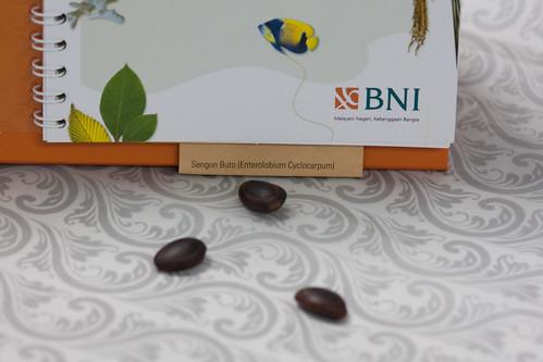 BNI Go Green  Bibit Tanaman Sengon Buto