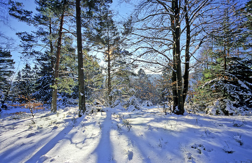 Teutoburger Wald in Wintertime - Trees along the Hermannshöhen hiking trail - Copyright by Martin Liebermann