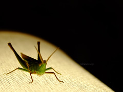 Saltamonte #1 (iohandesign) Tags: insectos nature fuji bugs fujifilm bichos s200 grashopper grasshoper erx saltamonte tucura