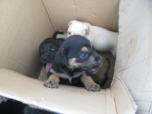 ru roh. more puppies for adoption.
