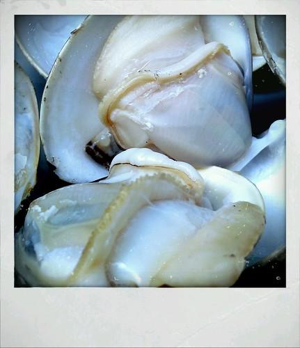 奶油螃蟹@蚌殻