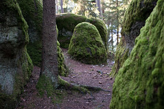 Woodland (vucko4711) Tags: steine wald moos nikkor35mmf18