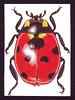 ATC 43 (Made by BeaG) Tags: red black art animal atc artisttradingcard pencil ink bug belgium drawing kunst fineart belgië insects bugs ladybug drawn rood zwart dier kunstenaar insecten handdrawn kever inkt lieveheersbeestje colouredpencils tekenen potlood beag kleurpotloden kevers getekend animaldrawing kunstenares handgetekend handdrawnatc designedandmadebybeag ontworpenengemaaktdoorbeag drawnbybeag getekenddoorbeag handgetekendeatc tekeningvaneendier atc43 beagatc43